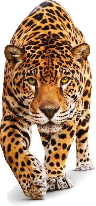 O Jaguar